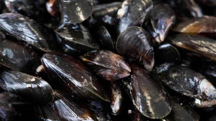 Mussels, 'super-filters' that can help beat water pollution, Consumer