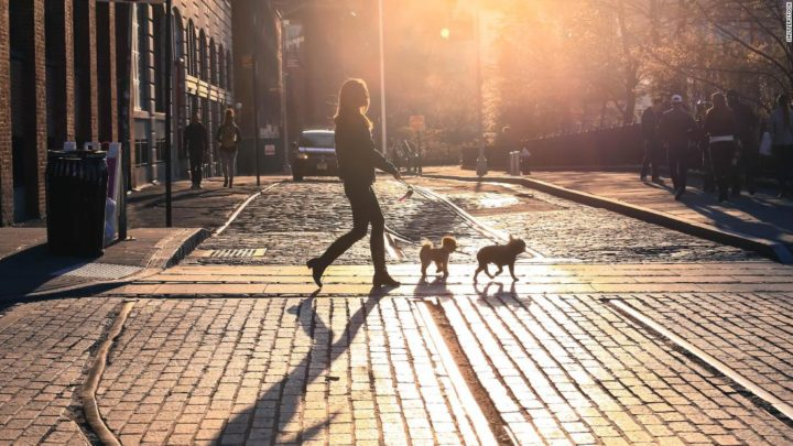 Dog-walking startup Wag was an investor's dream. Then things got messy