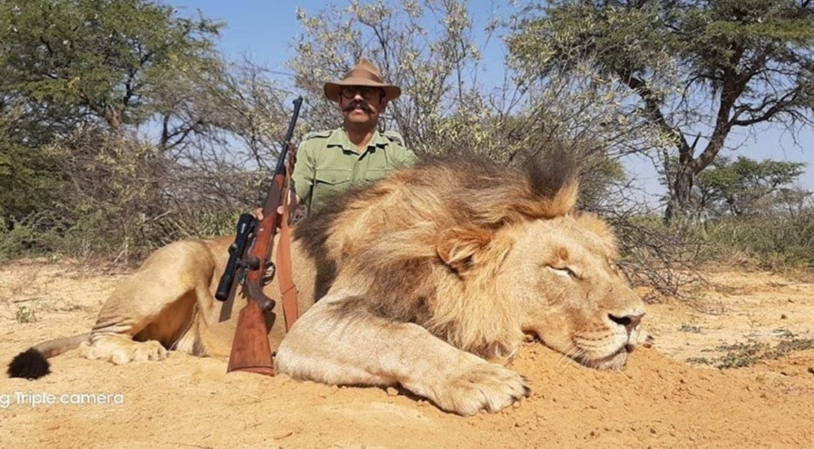 Trophy hunting firm offering sickening buy one, get one free lion killing package – World News