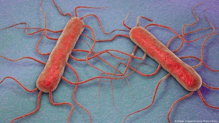 Listeria-tainted sausage deaths in Germany lead to calls for better consumer protection | News | DW