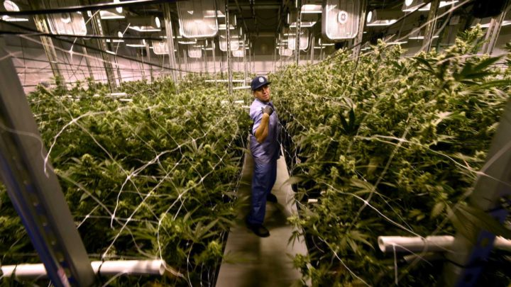 CT adds chronic pain to medical marijuana program, could double participating patients